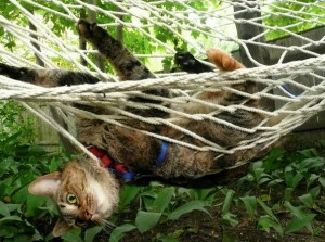 Escape plot foiled by hammock